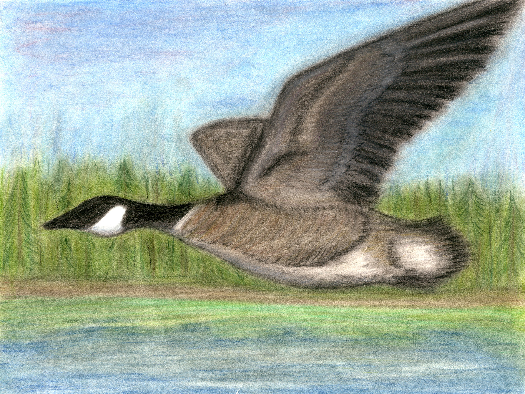 Canada Goose coats replica authentic - Junior Duck Stamp Art Contest | Education | New Hampshire Fish and ...