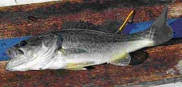 Tagged bass fishing new hampshire fish and game department for Bass fishing nh