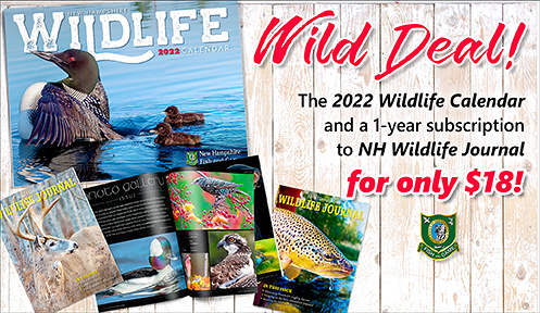 Welcome new hampshire fish and game department for Renew fishing license
