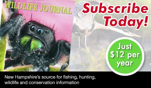 Subscribe to NH Wildlife Journal