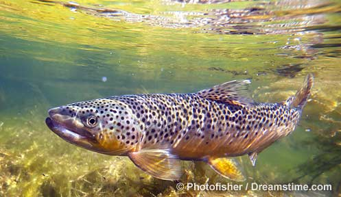 Nh Hunting And Fishing Licenses New Hampshire Fish And