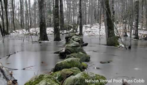 Vernal Pool by Russ Cobb
