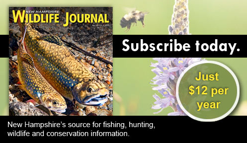 Nh wildlife journal magazine publications new for Game and fish magazine