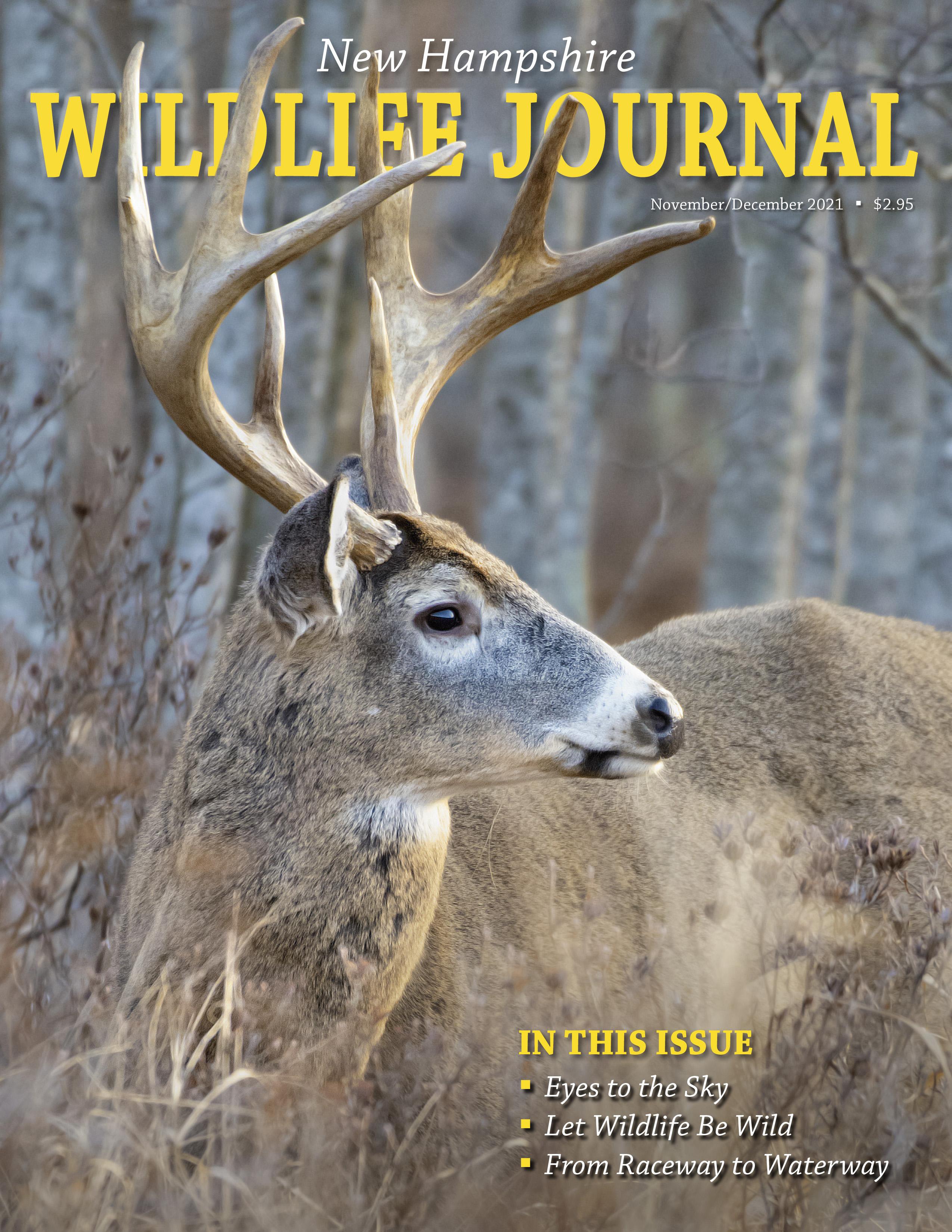 Freshwater fish magazine - Nh Wildlife Journal