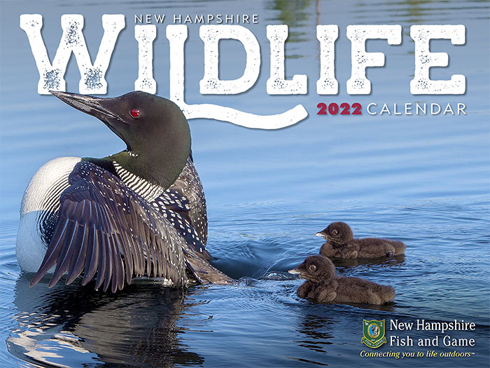 NH Wildlife Calendar | Shop | New Hampshire Fish and Game ...